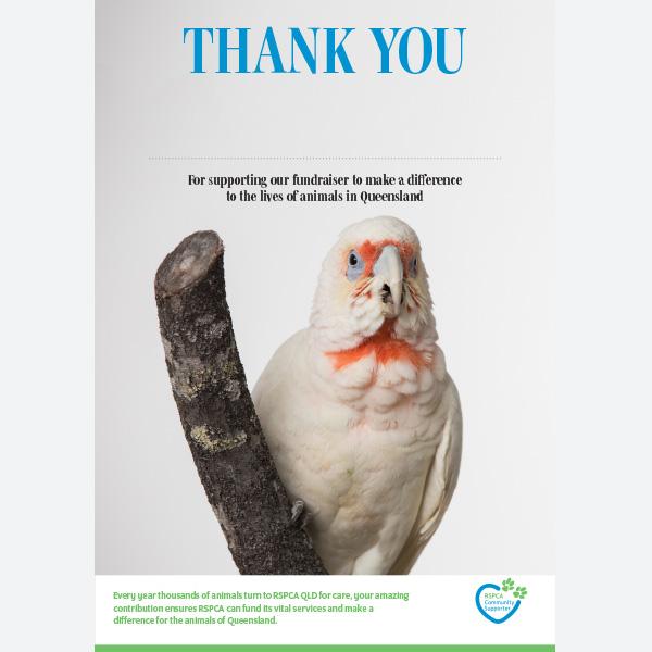 Thank You Certificate - Bird