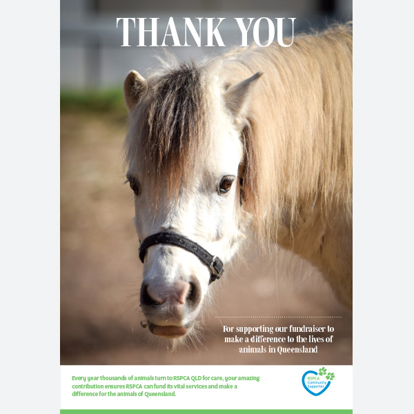 Thank You Certificate - Horse